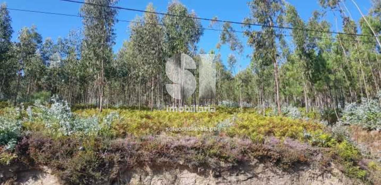 terreno para compra em vila verde cervaes BGCVP15