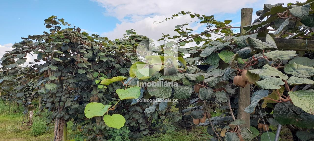 terreno para compra em oliveira do bairro oia MEAAM3080