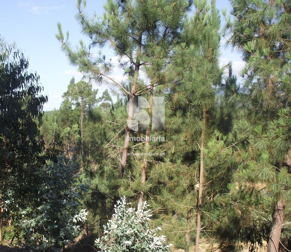 terreno para compra em miranda do corvo uniao das freguesias de semide e rio vide LSAAC217